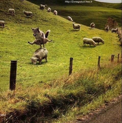 loup, flou, youp la boum ! ...