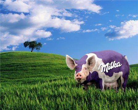 cochon-milka