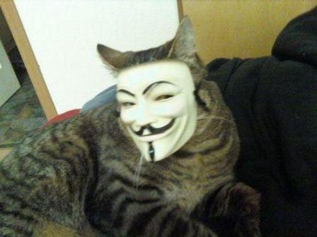 chat-avec-masque-anonimous