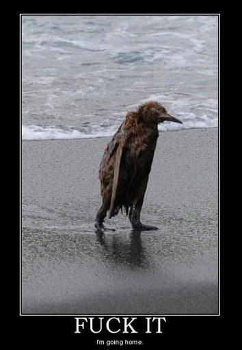 funny-wet-penguin-meme-beach