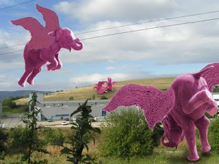elephant-rose-steph-500x375