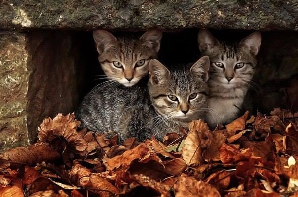 Three cool cats