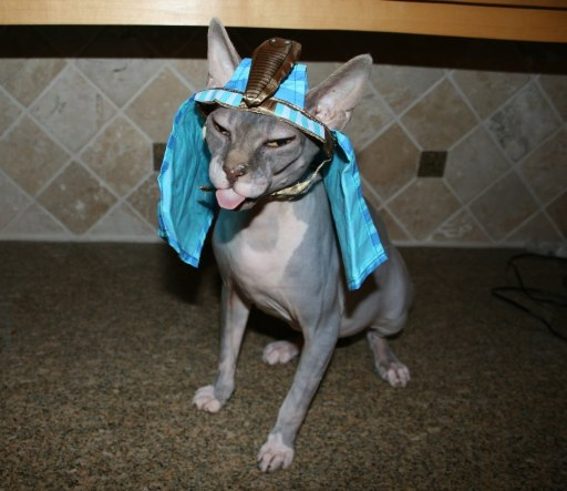 Halloween Tito