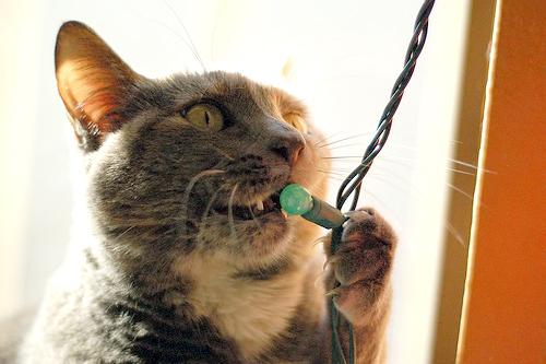 cat-eating-christmas-lights