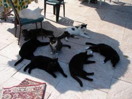 Cat under the Sun