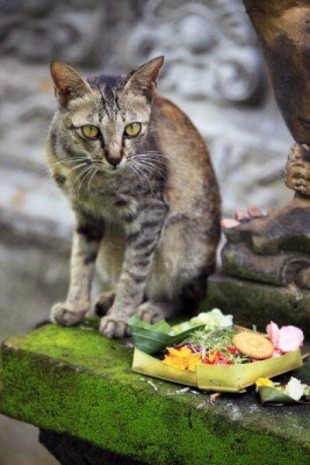 chat-va-se-regaler-au-temple-bali-indonesie