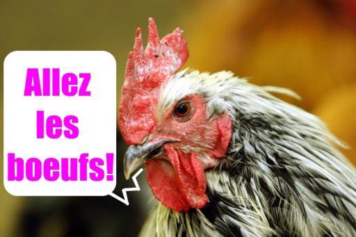Y'a pas que du poulet ...