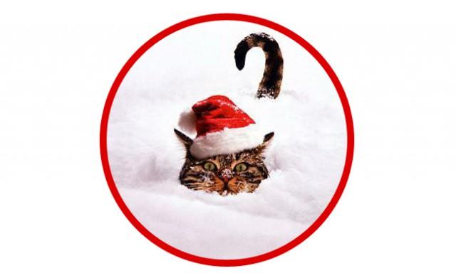 Cat-In-Snow