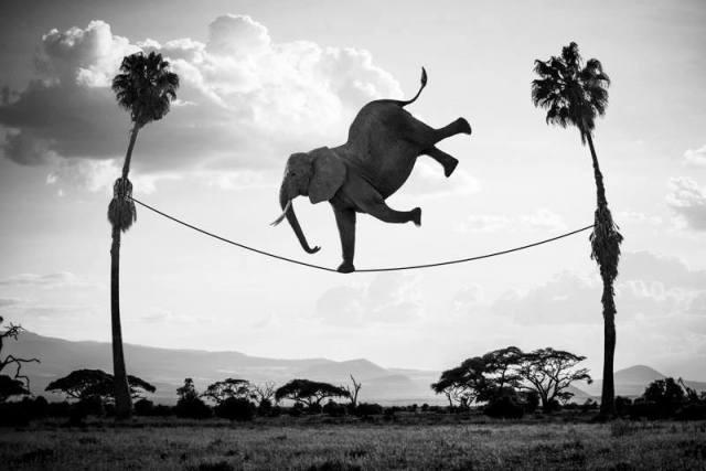 Elephant PS France