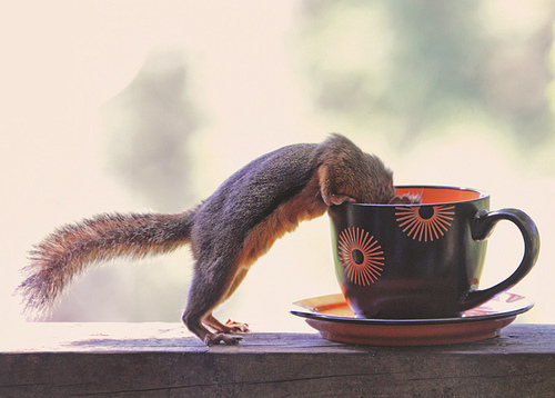 squirrel-coffee