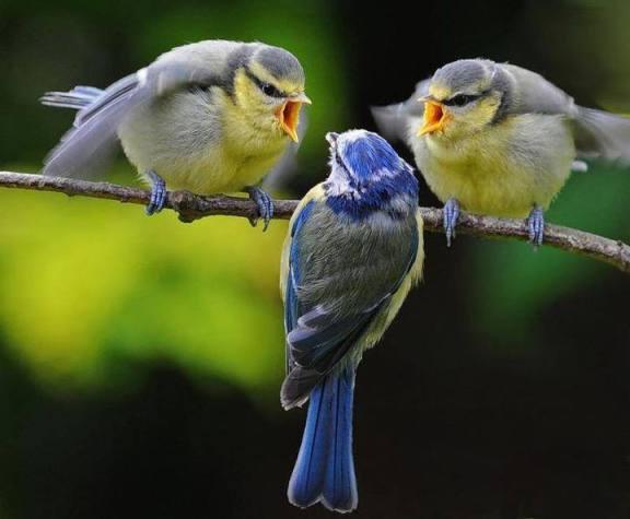 Genre Birds