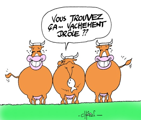 Humour Vache Poisson d'avril 1er Avril Joke Blague Humour