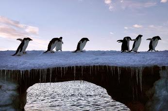 Pingouins France Election #Municipales2014 #Paris2014
