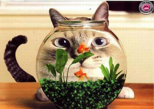 Poisson d'avril 1er Avril Joke Blague Humour Chat Funny Cat
