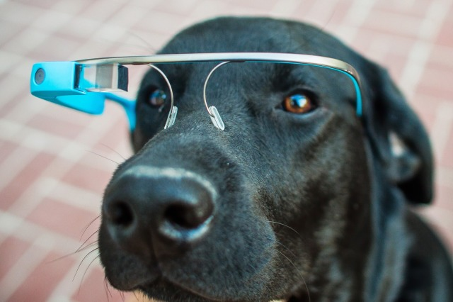 Chien Blue Google Glass Antarctica Vangelis