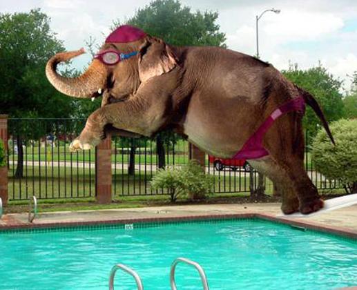 elephant-jumps-in-swimmingpool