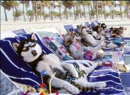 big_3889-chien-vacances