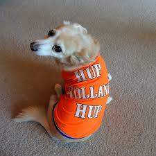 Orange Hup Holland