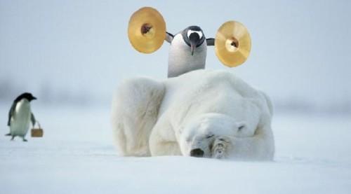pingouin-facetieux