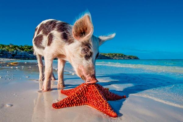 Baie des Cochons