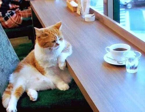 Bob au café