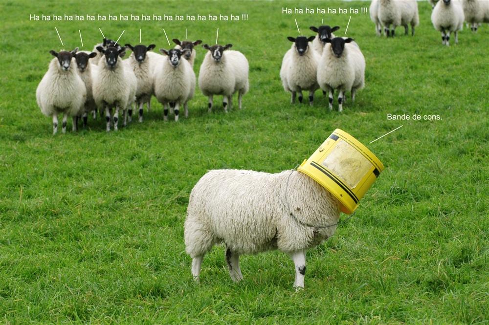 To qe or not to qe telle est la question pour euroland - Image mouton humoristique ...