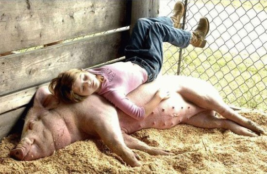 calin-cochon