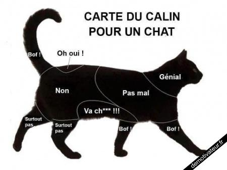 Carte-du-calin-pour-un-chat