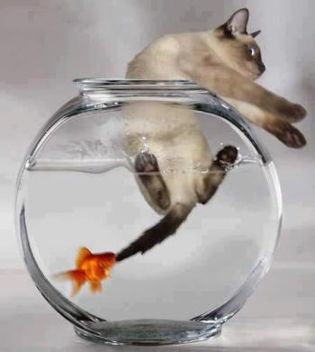 poisson-mange 1er avril