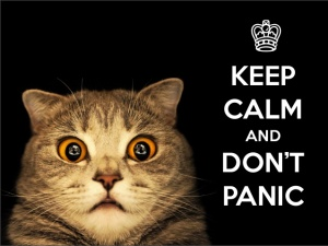 Keep Calm Cat