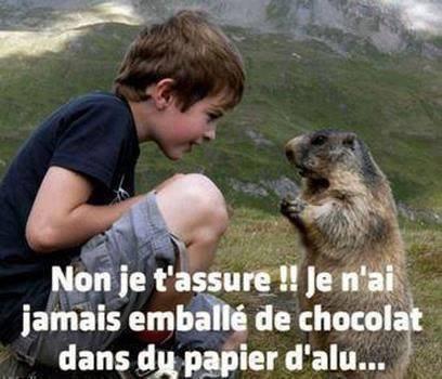Marmotte Milka 2
