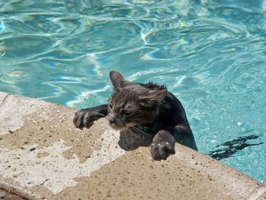 swimming_cat