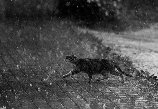 Chat sous la pluie